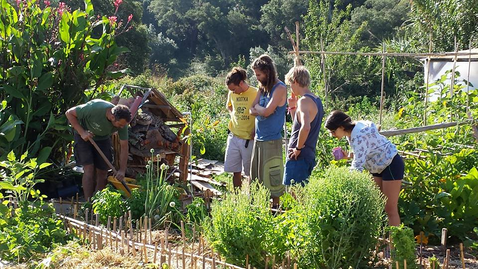 WORKSHOPS & PERMACULTURE DESIGN COURSES