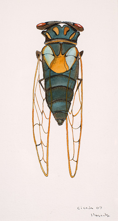 163 Cicada 2007 WoP 8x4.jpg