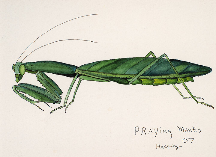 164 Praying Mantis 2007 WoP 5x7.jpg