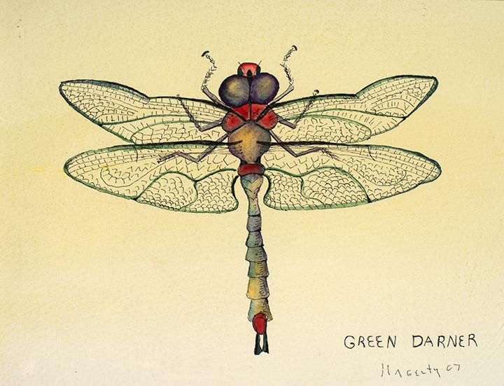 162 Green Darner 2007 WoP 7x8.jpg