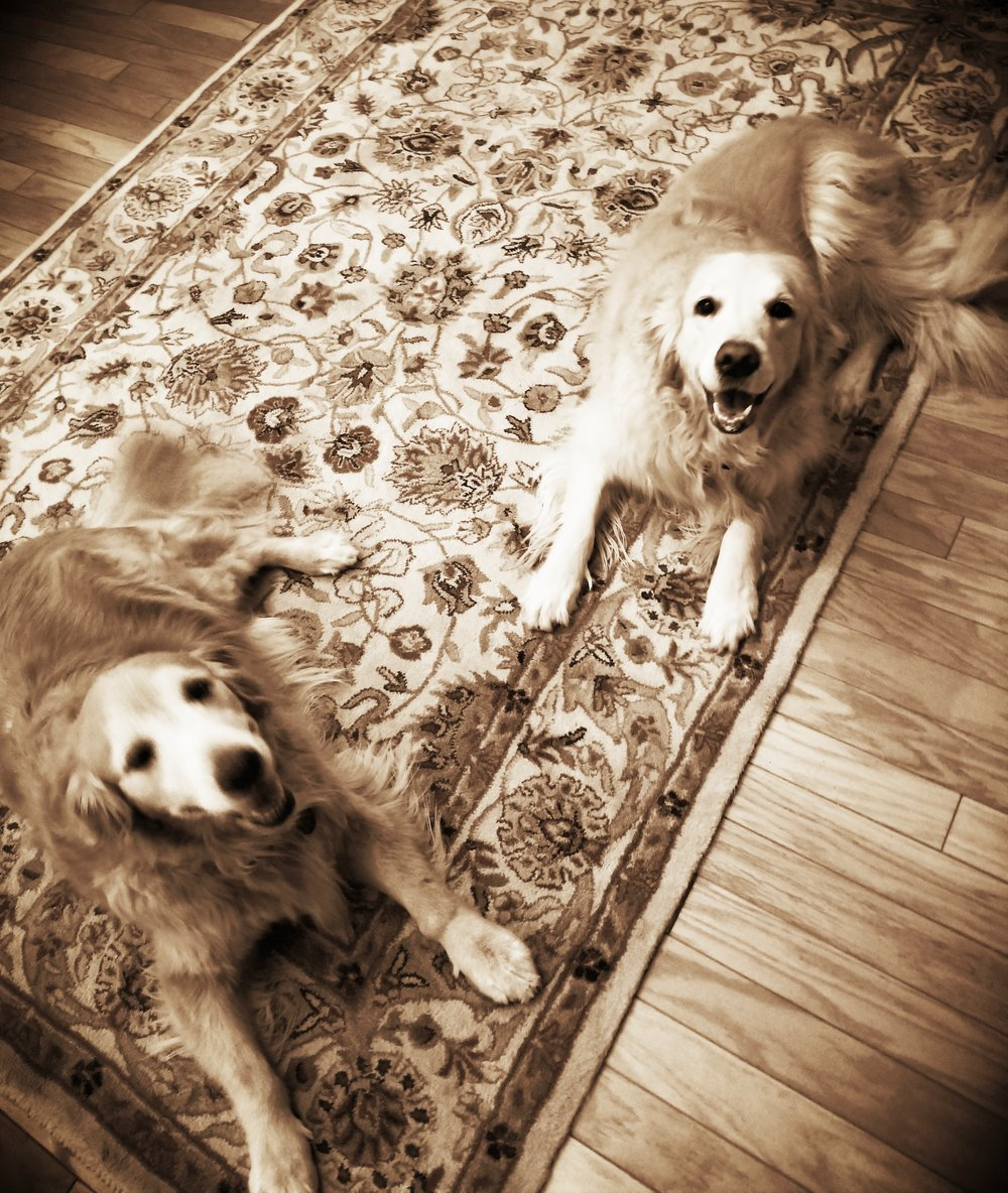 Callie & Bella- Blue Bell, PA