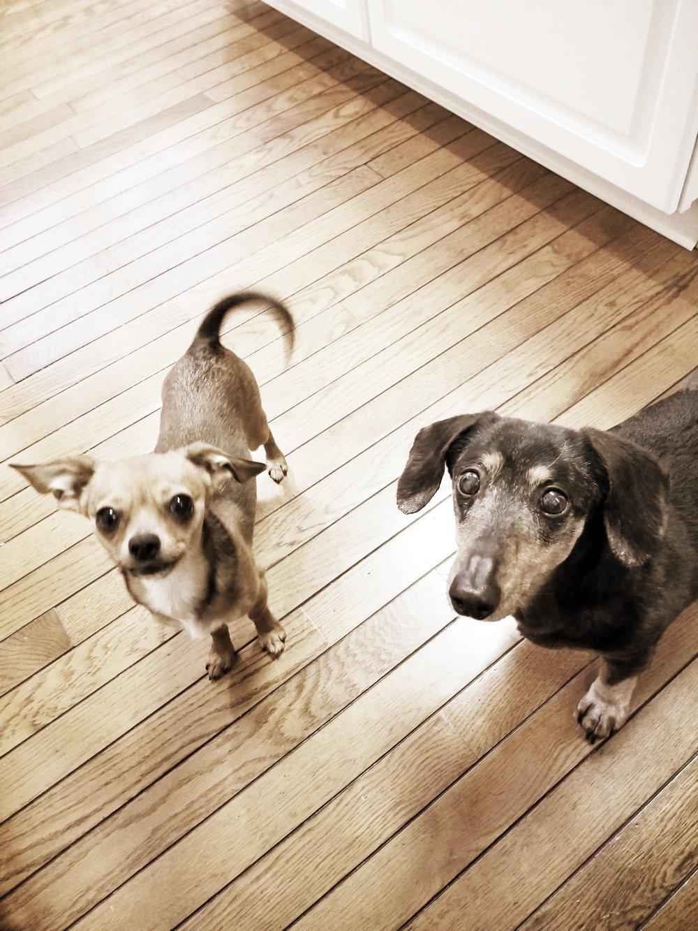 Murphy & Lola- Blue Bell, PA