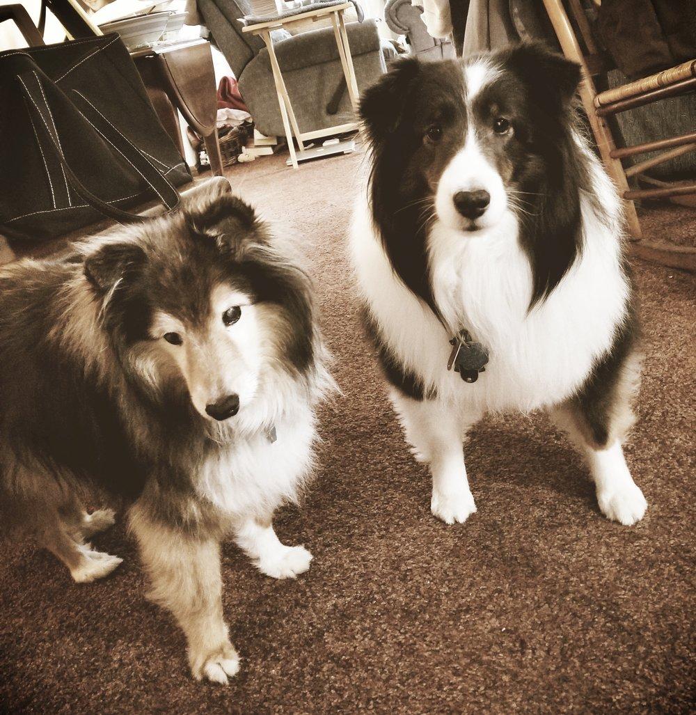 Cody & Maya- Lansdale, PA