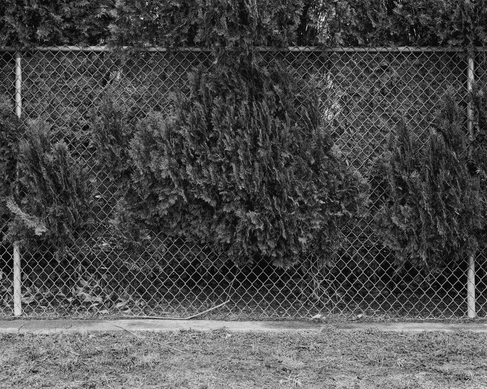 Dog Park Trees Print.jpg