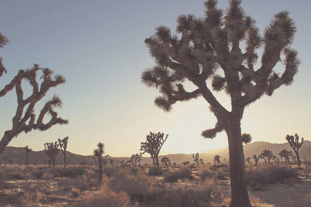 Joshua Tree National Park | Joshua Tree, CA