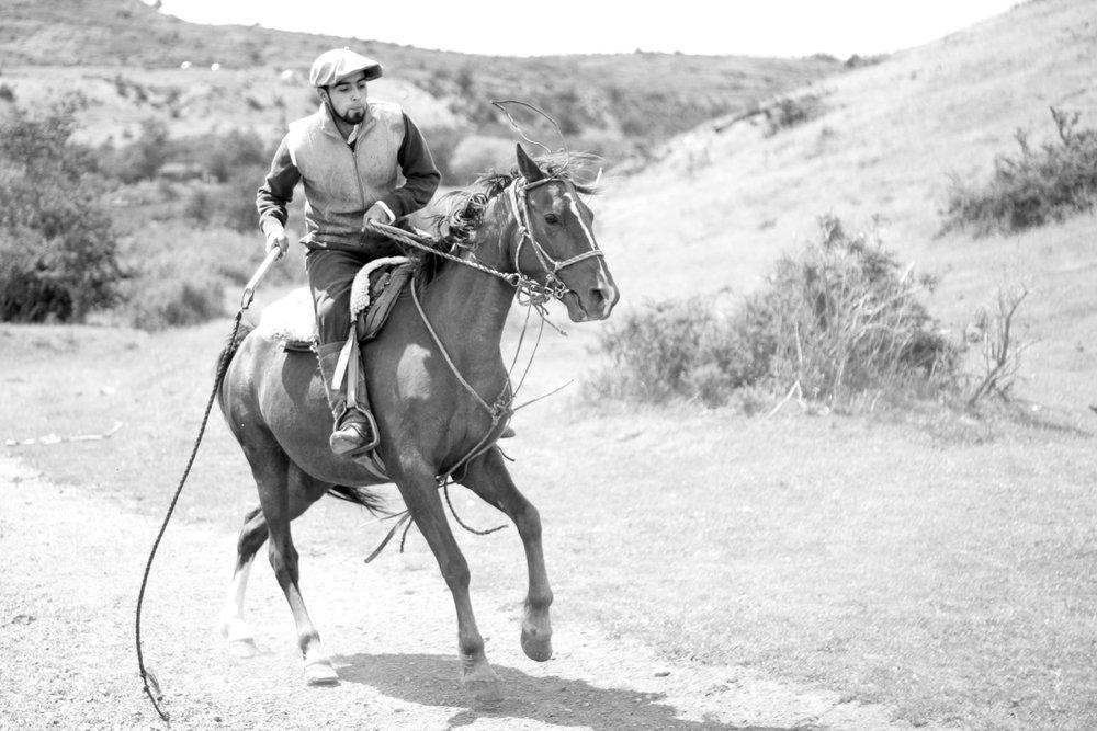 Cowboy, Torres del Paine Chile