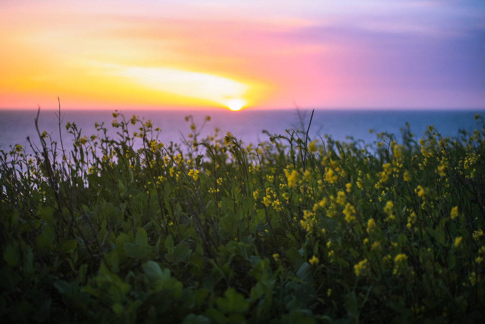 Spring palette, Davenport California