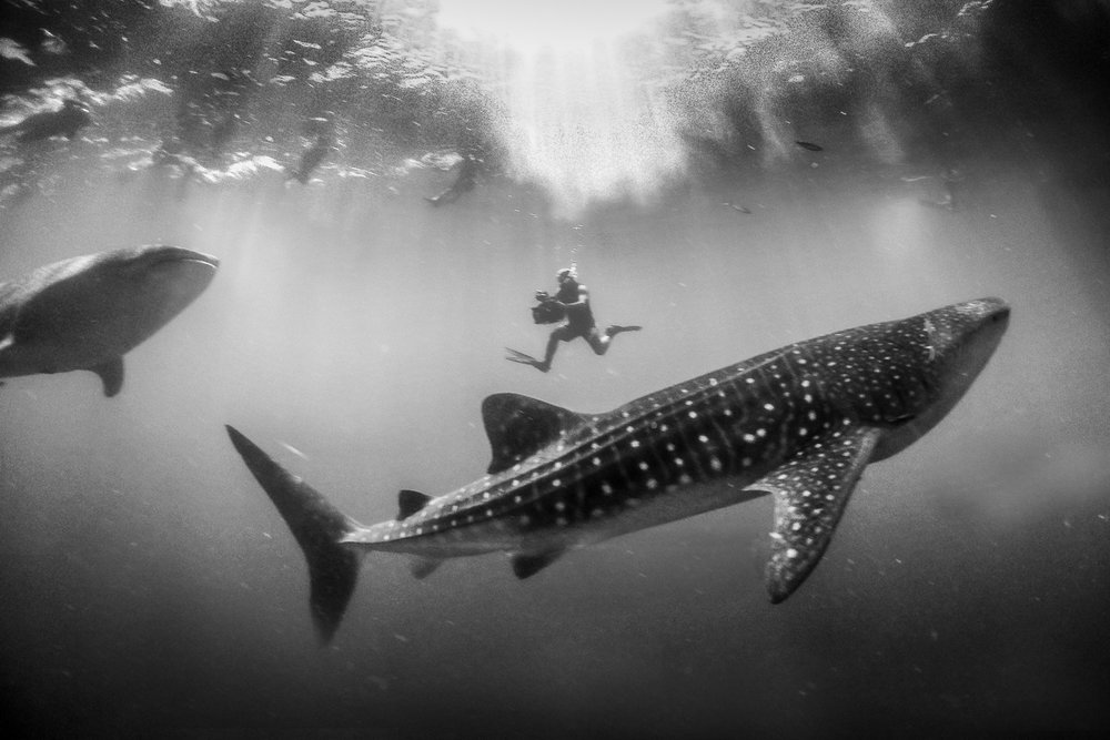 Driving with Whalesharks, Mexico