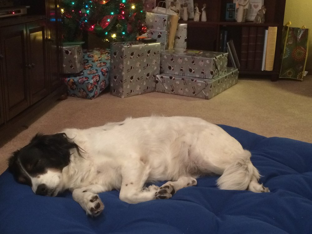 She would have slept the entire day (even through present opening) if we let her. She has epic relaxation skills.