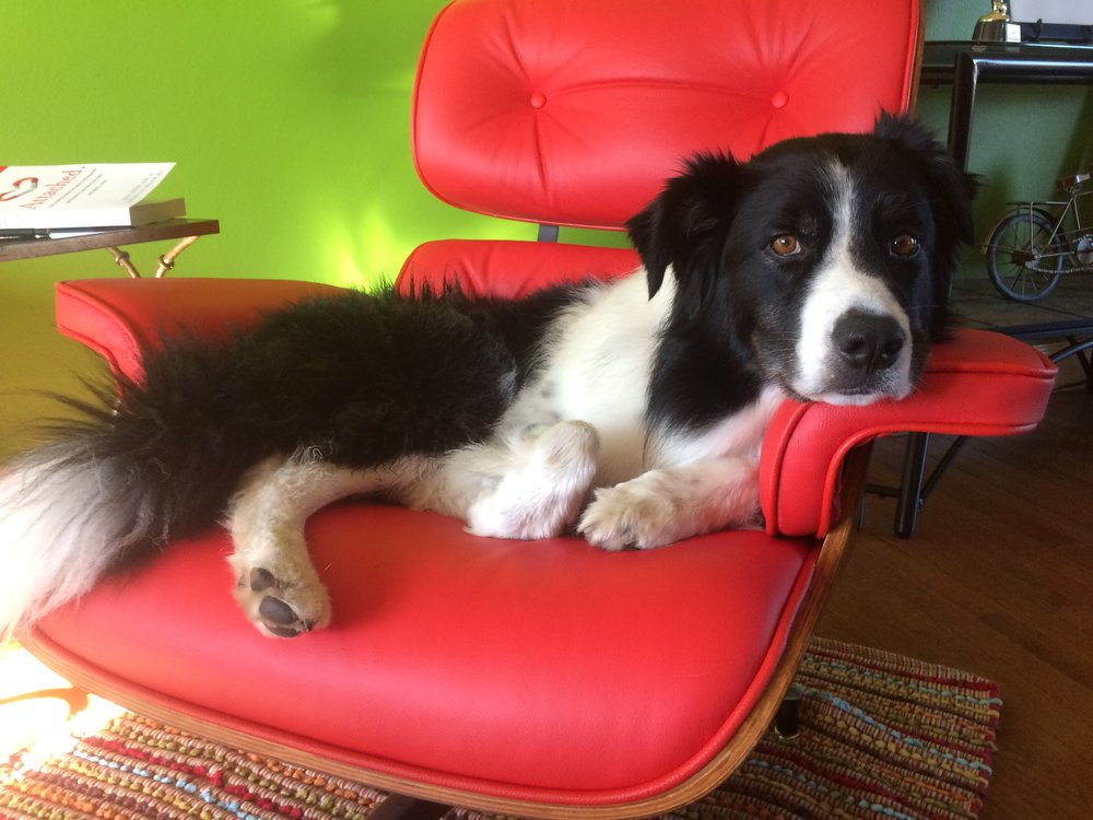 """Fromm (aka, #FrommersVonFancyPants) doing his best """"chair model"""" pose."""