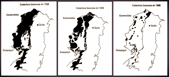 These three maps show forest cover (in black) in the coastal plain of Ecuador in 1938, 1958, and 1988. Ecomadera works in the last remaining block of forest (due north of Quito)as the original rich native rainforests are progressively converted to agriculture.