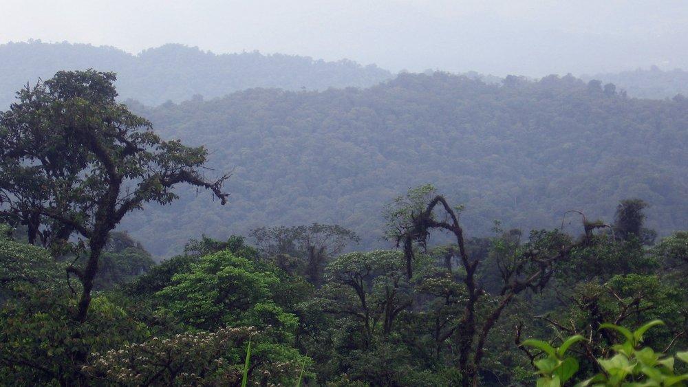 conservation_vsco.JPG