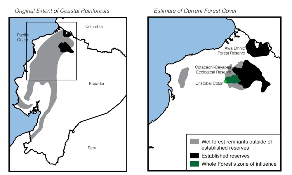 Whole Forest's zone of influence is strategically located on the border of the last remnants of the Chocó Forest. (click to enlarge)
