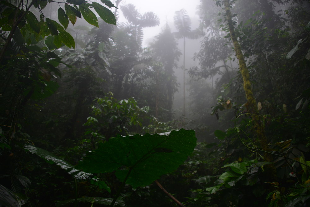 Conserving Tropical Rainforests    preventing carbon emissions
