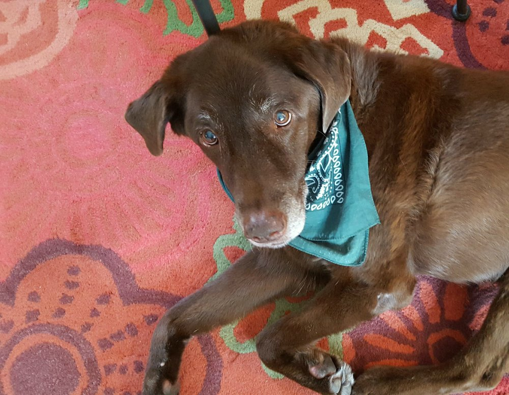 Bailey-Green-Bandana-11Jan2017-resized.jpg