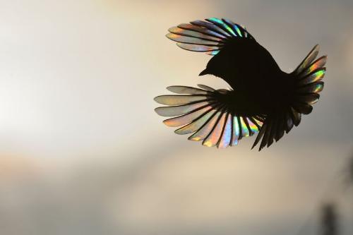 bird in shadow.jpg