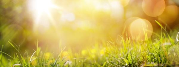 sunny solstice.jpg