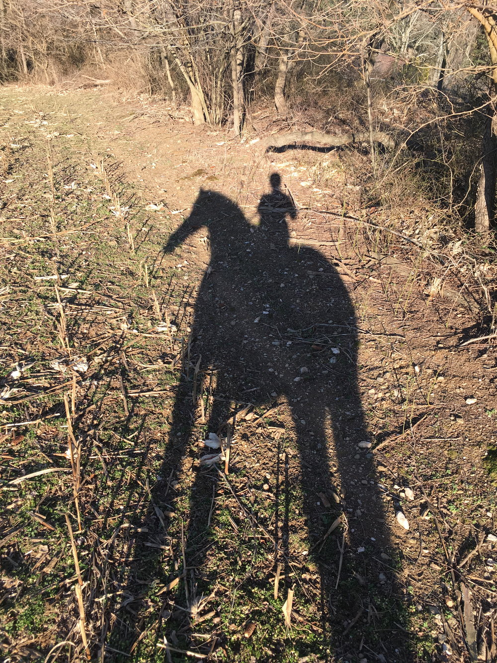 Shadow Horse and Rider