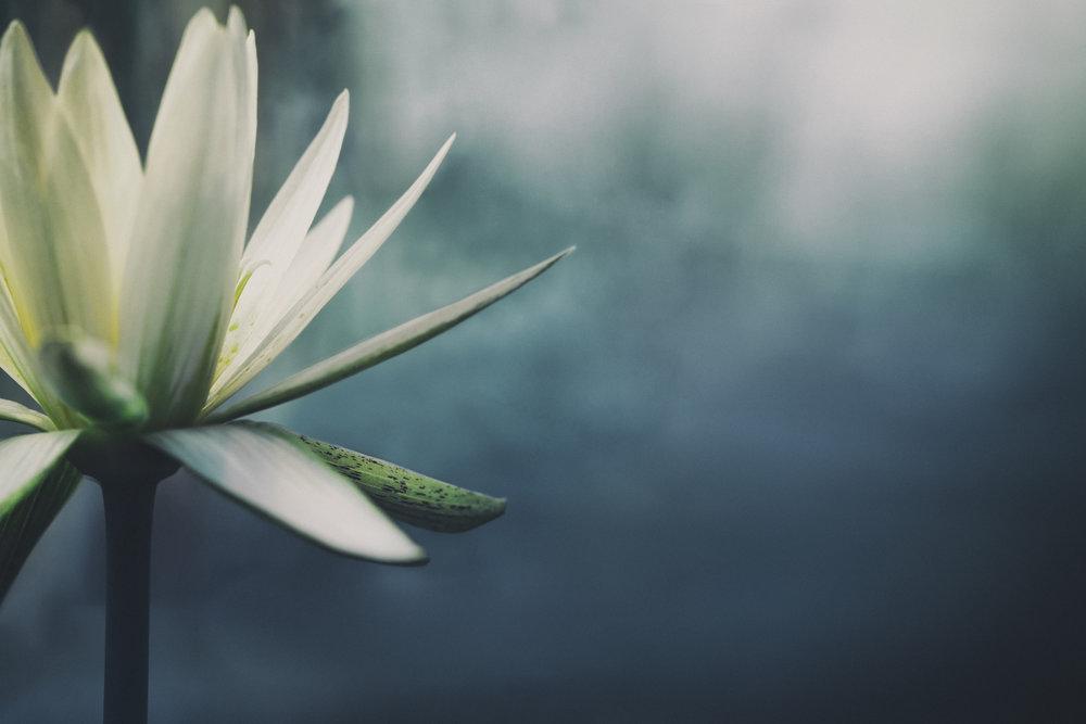 La valeur d'un esprit tranquille... -