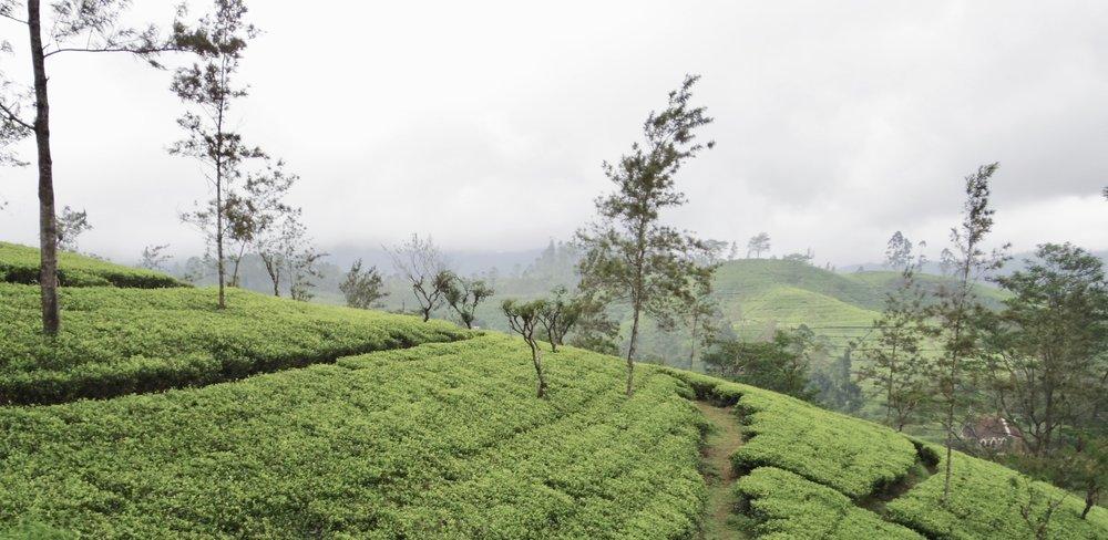 Sri Lanka | Kandy to Ella Train