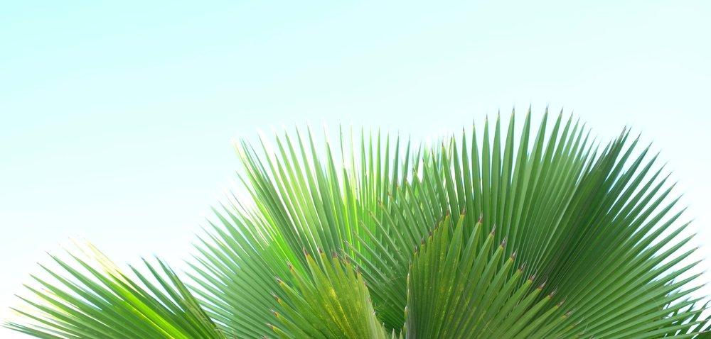 palm-tree-puerto-rico-isla-verde-rucksack-magazine