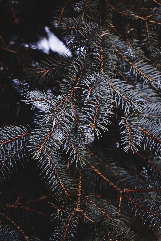 blue-spruce-rucksack-magazine-1