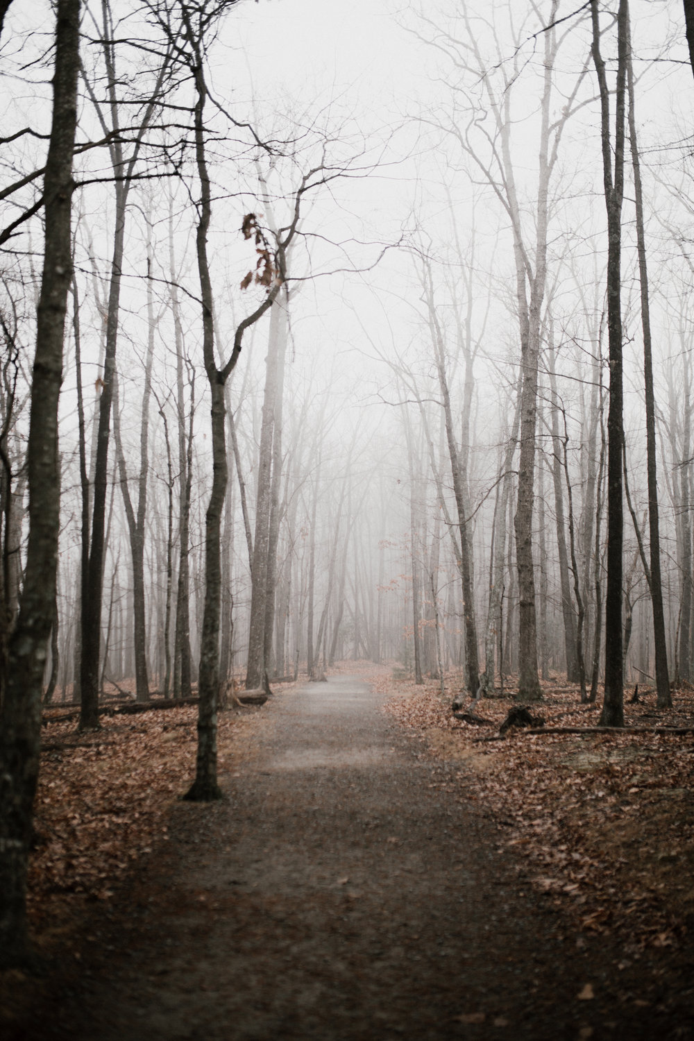 forest-and-fog-rucksack-magazine-2
