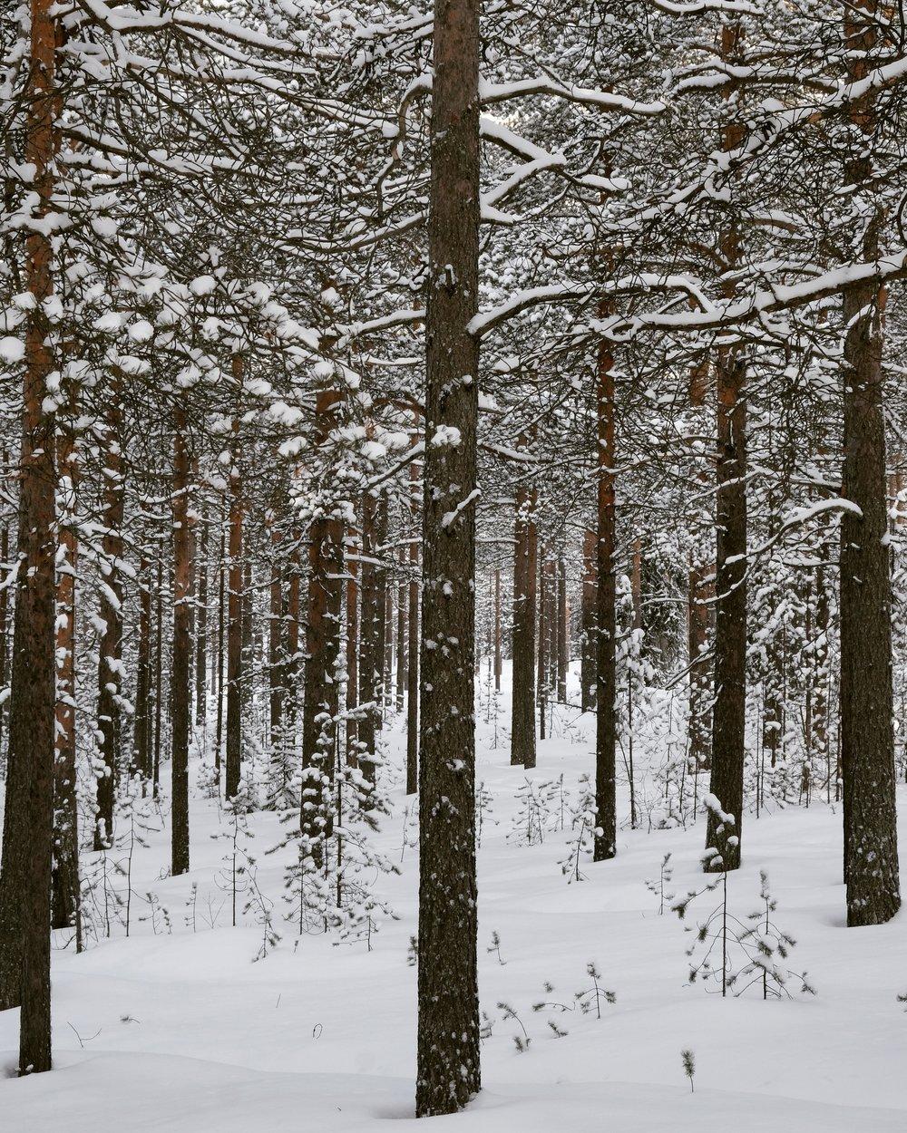 a-walk-in-the-forest-rucksack-magazine-4