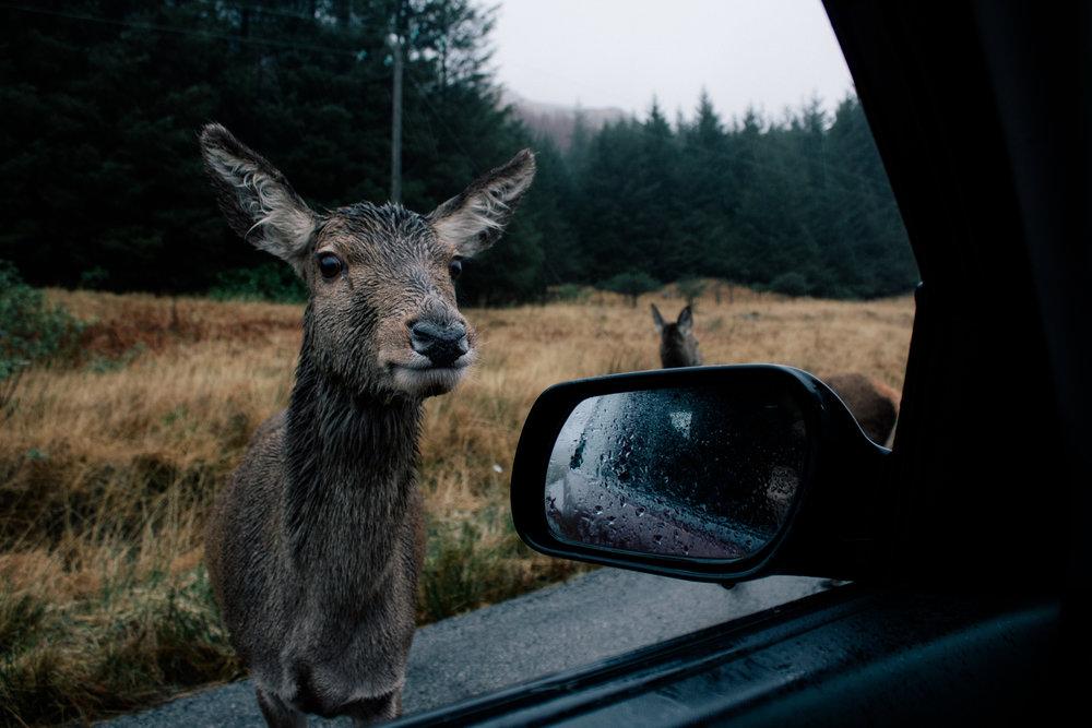 deer-watching-in-glen-etive-rucksack-magazine-1