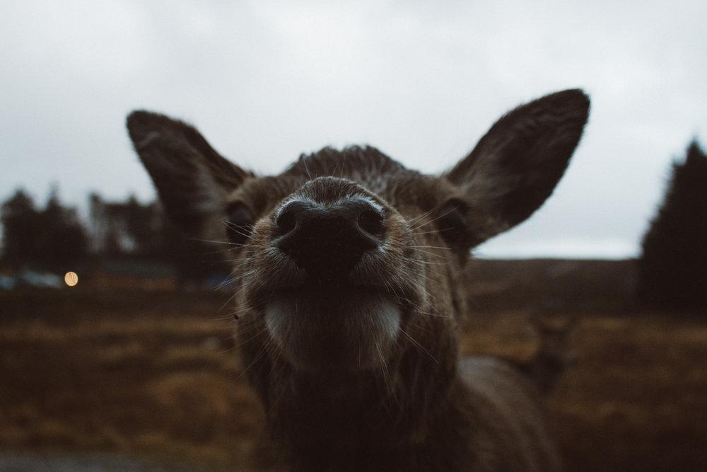 deer-watching-in-glen-etive-rucksack-magazine-4
