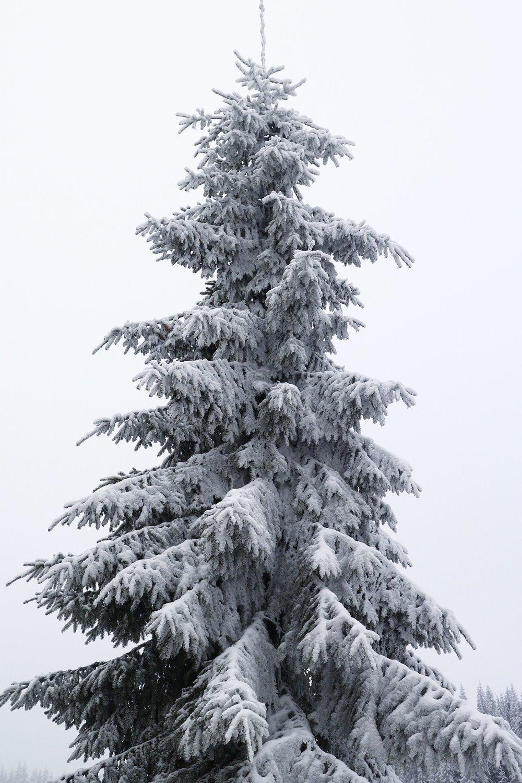 Winter-Wonderland-Norway-Tree-Rucksack-Magazine
