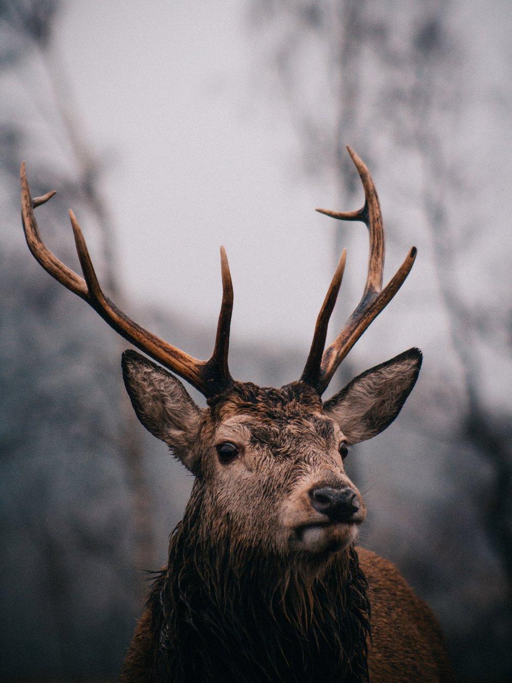 deer-watching-in-glen-etive-rucksack-magazine-2