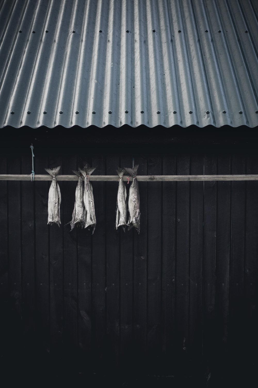 Faroes_Rucksack ©darylscottwalker (10 of 35).jpg