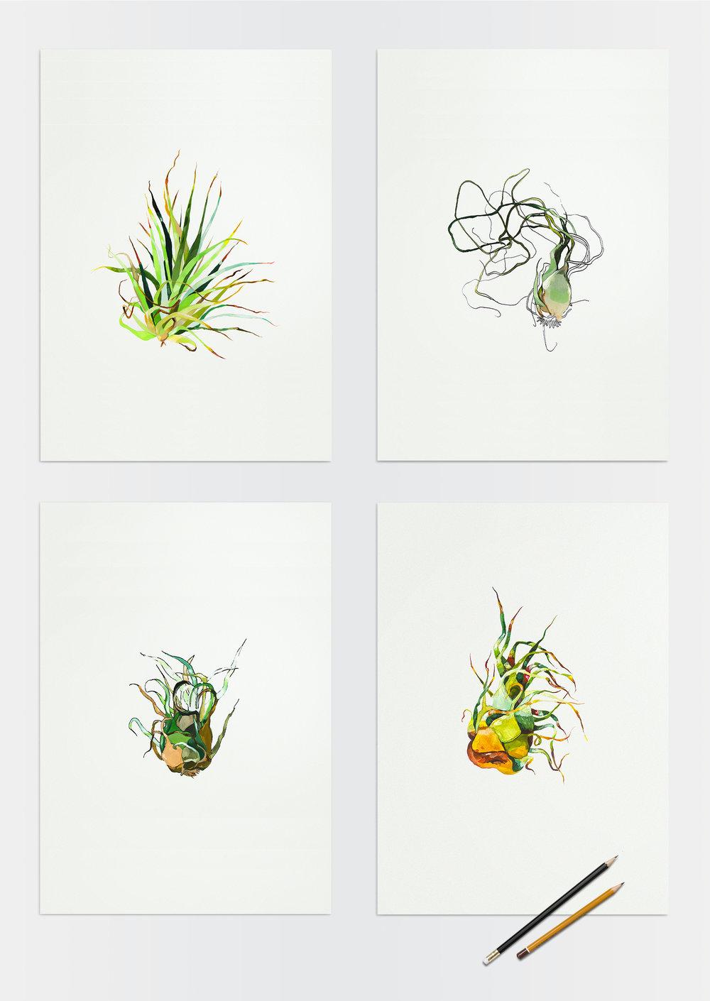 Refonte-illu-plantes.jpg