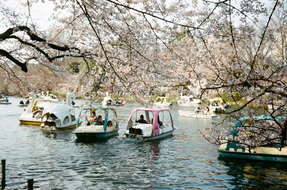 17-JAPON-argentique-Tokyo-fevrier-2017-0050.jpg