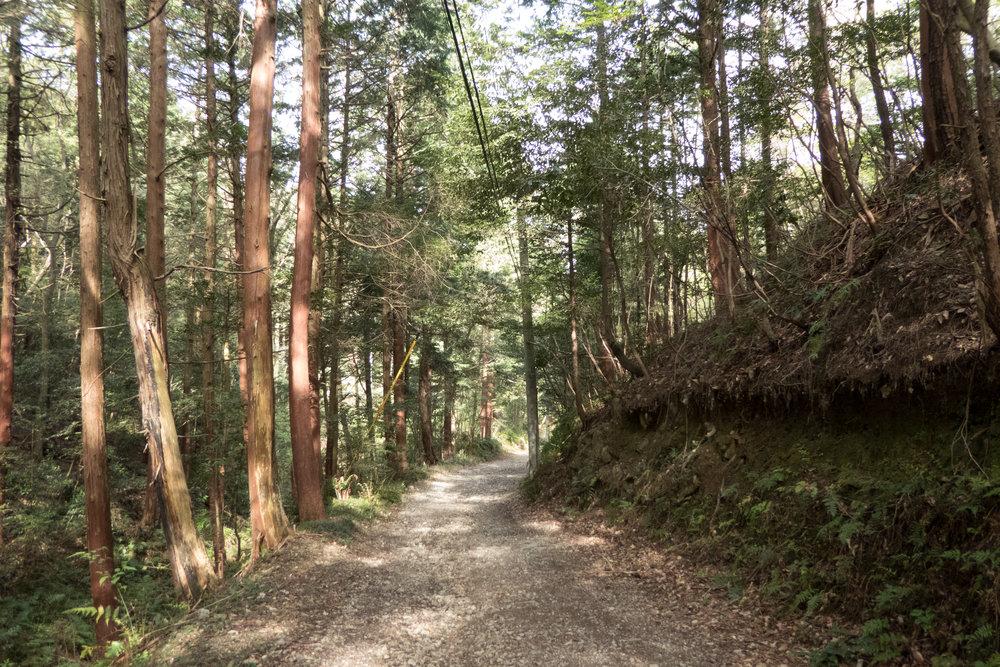 Local rindo in Inuyama, Aichi prefecture.