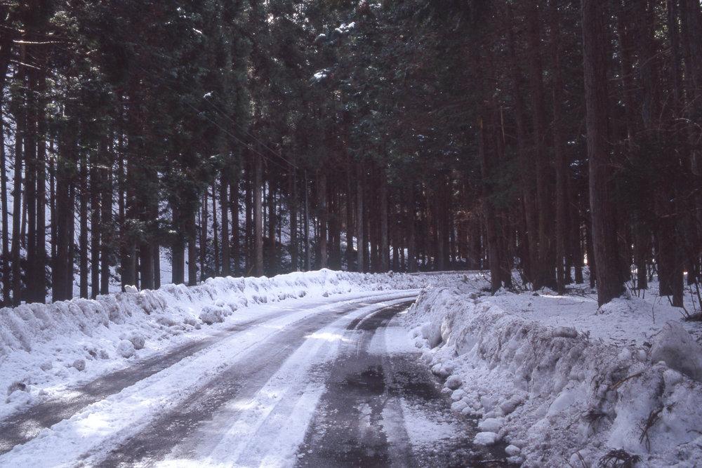 Rindo in winter, Gifu prefecture.