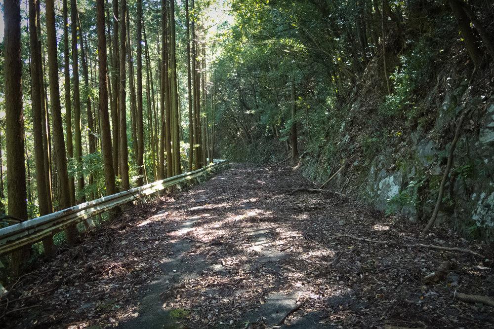 Kii_Nagashima_Shima-8.jpg