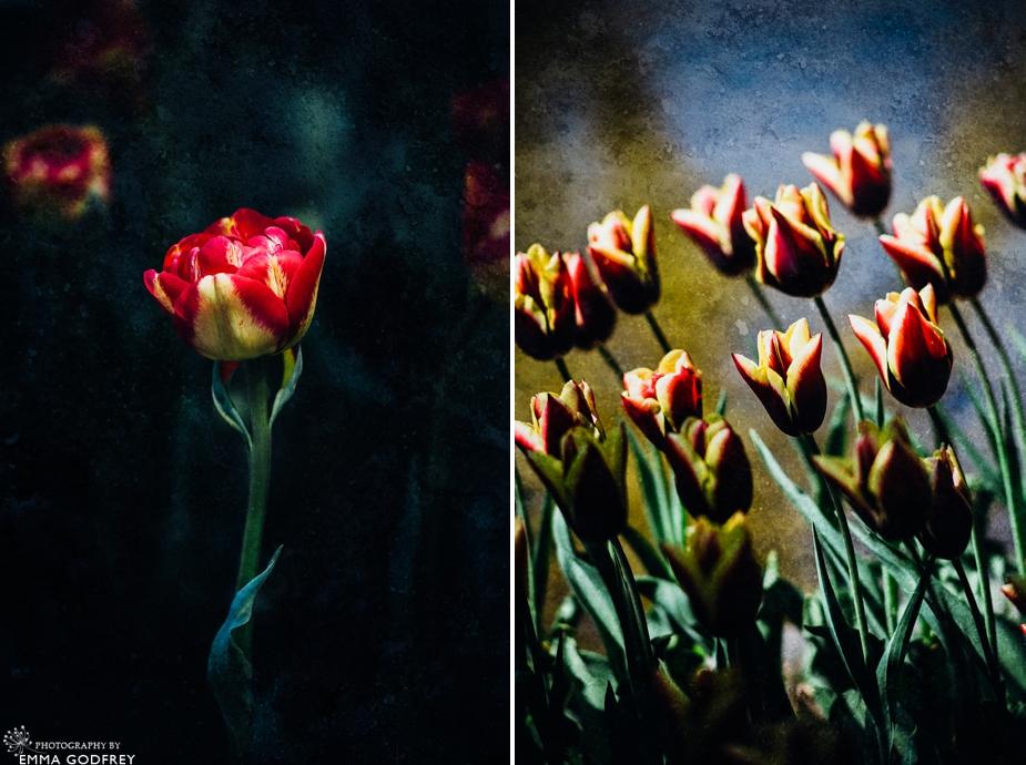 Morges-Fete-Tulipe-2014_0003.jpg