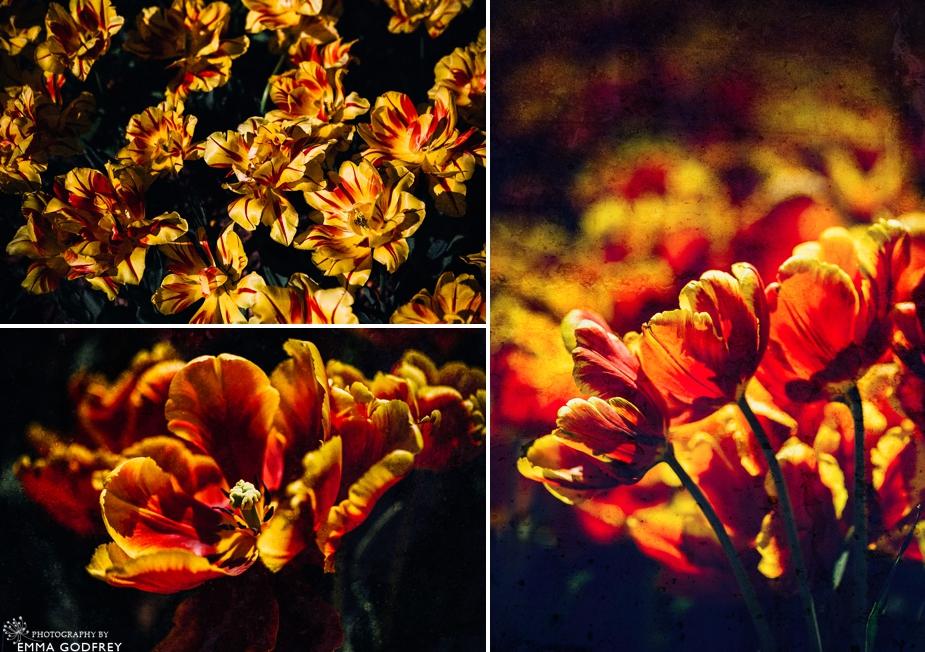 Morges-Fete-Tulipe-2014_0004.jpg