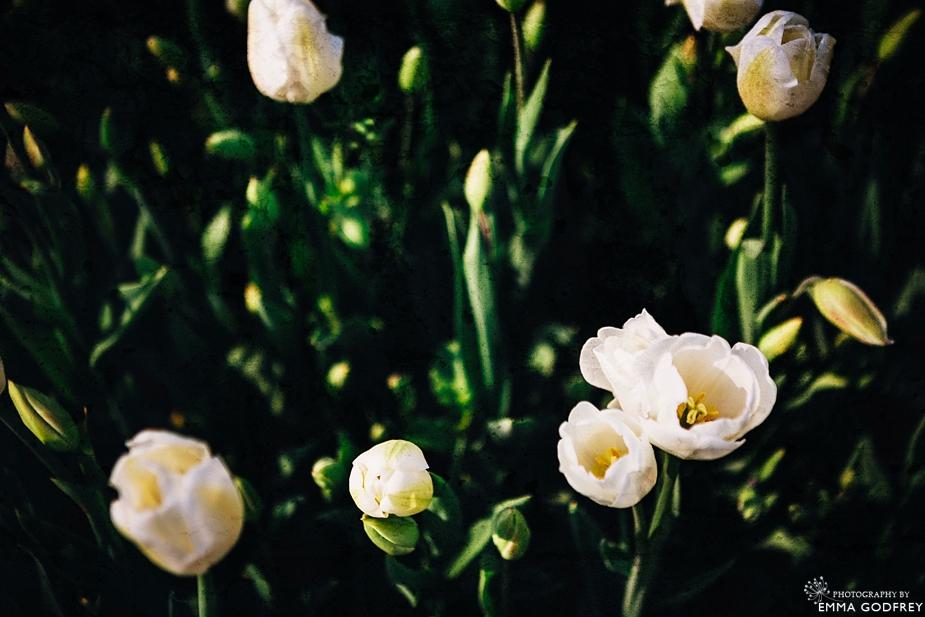 Morges-Fete-Tulipe-2014_0006.jpg