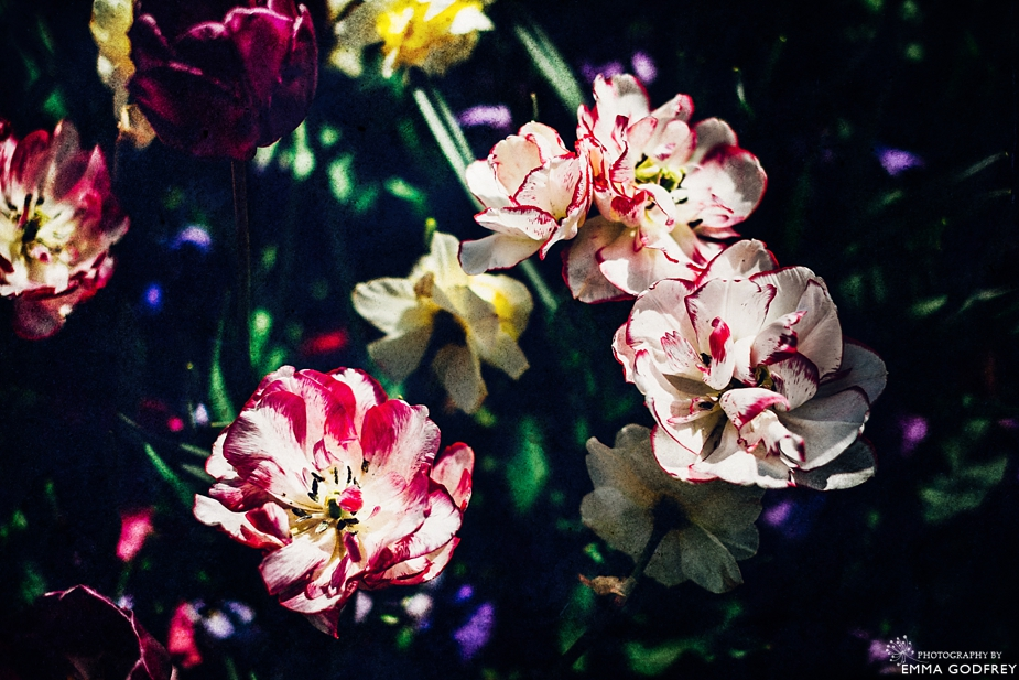 Morges-Fete-Tulipe-2014_0007.jpg