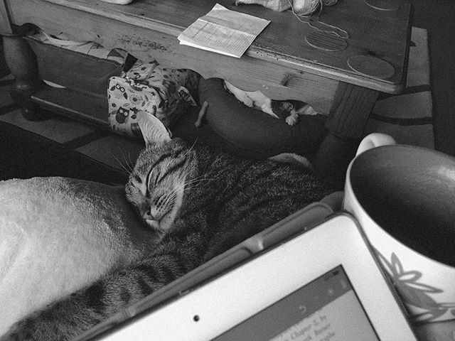 Treat for going for a bracing run in the cold. Coffee, cuddles and a good book (Soutter, why art photography) #gratuitouscatpic #catsofinstagram #readingtime