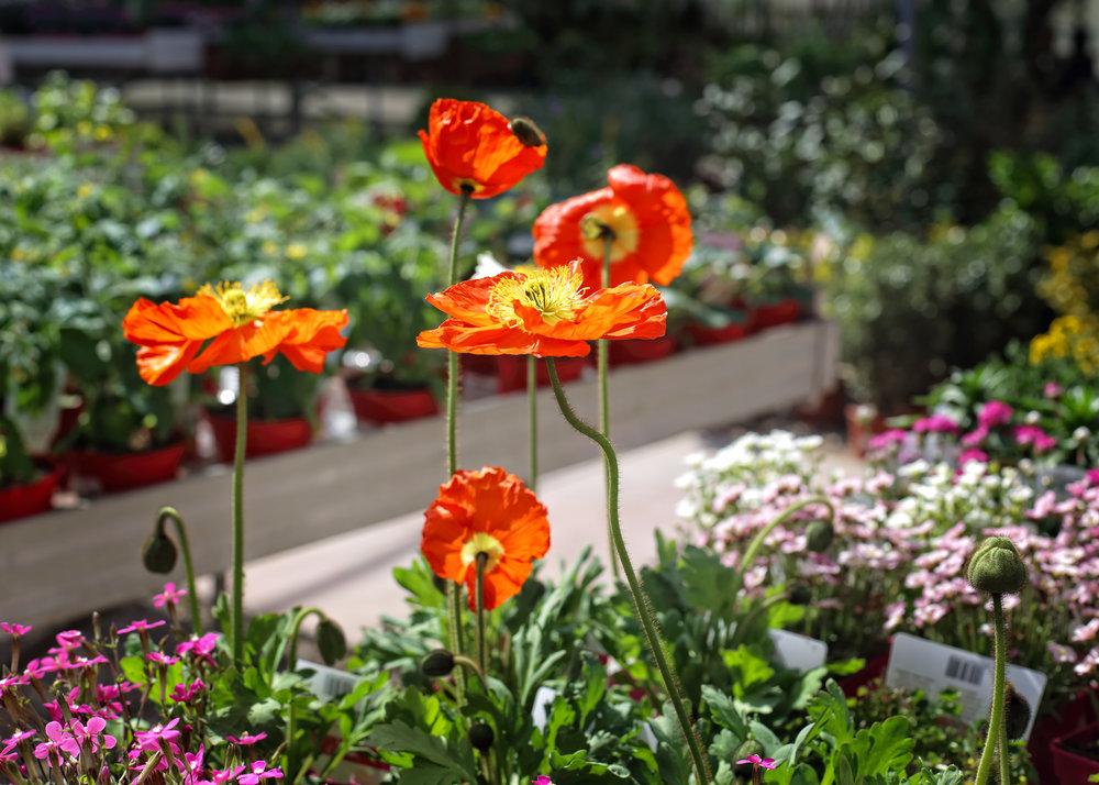 Bonsais y plantas ornamentales