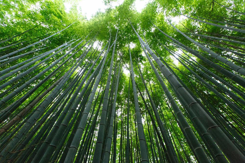 9.19.16_Kyoto_463A5581.jpg