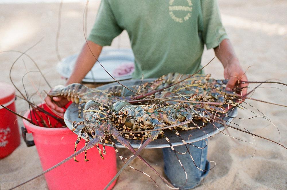 Vietnam_Crabs.jpg