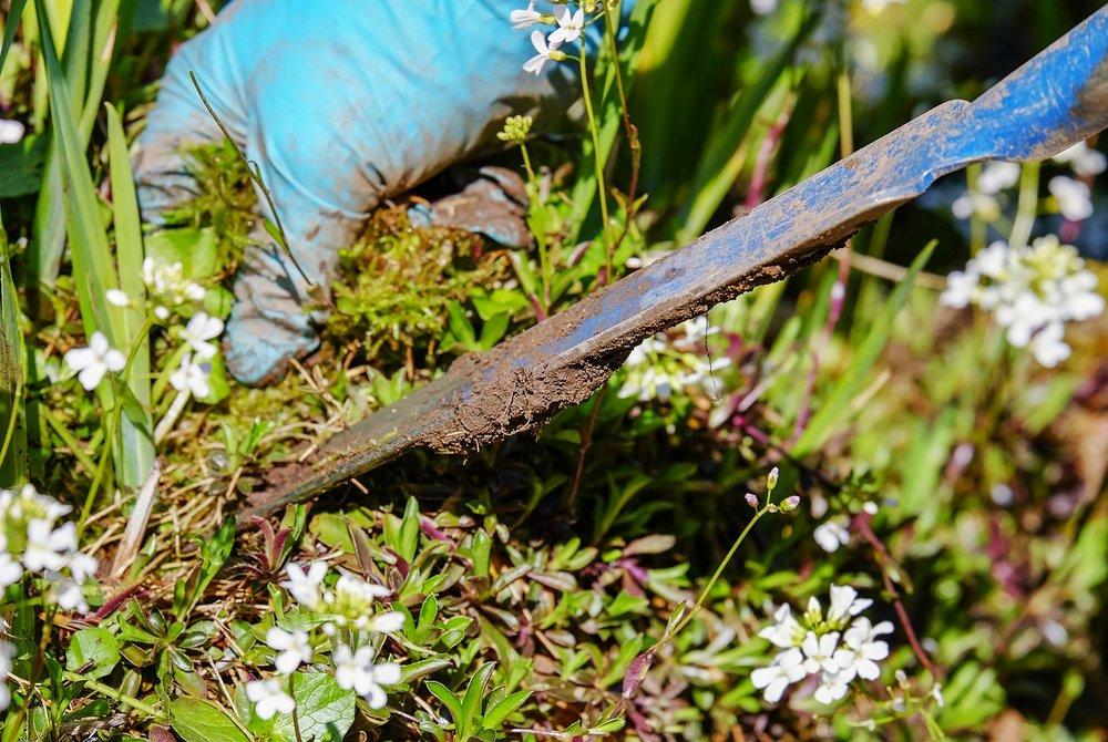 gardening-3296781_1280.jpg