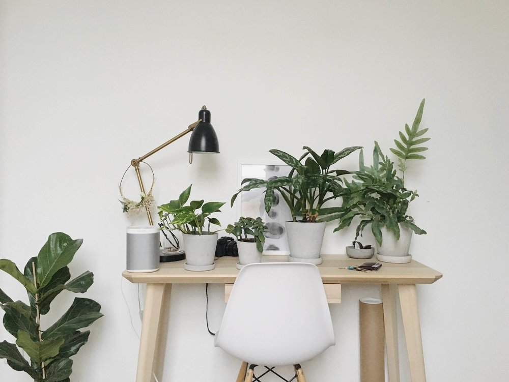 Home Plant Garden