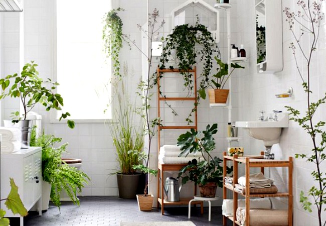Bathroom Herb Garden