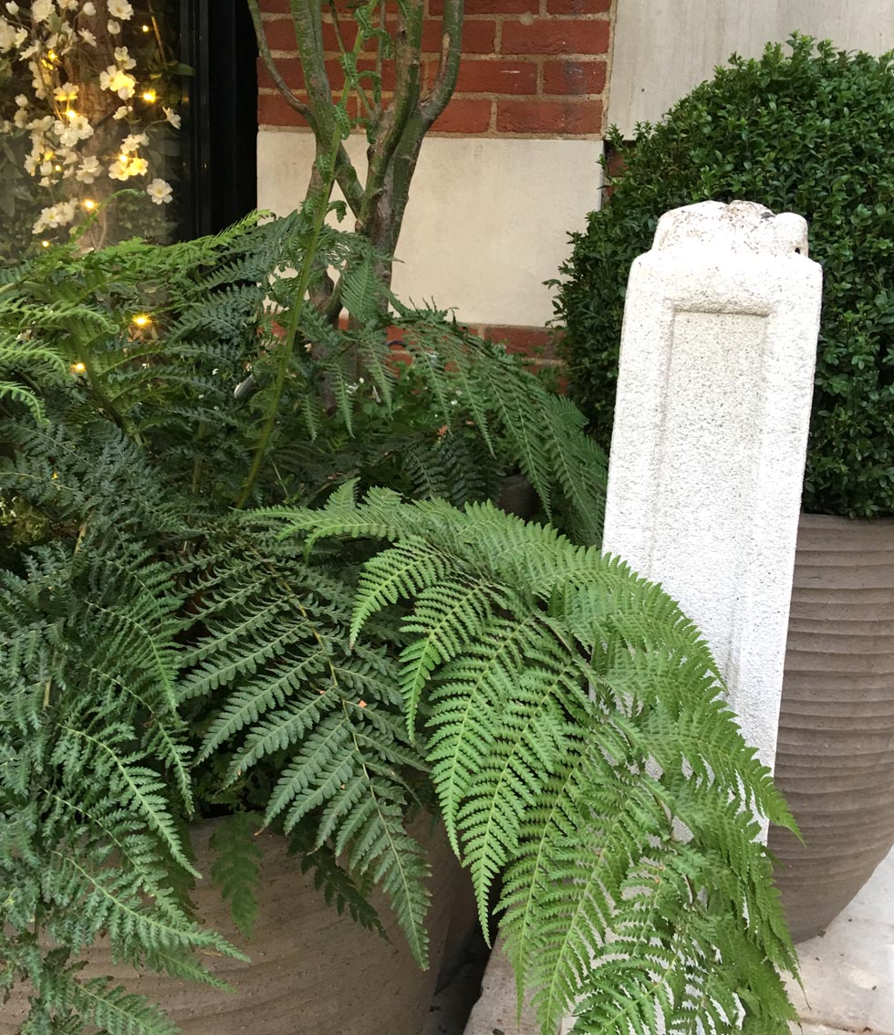 dalloway-terrace-ferns.jpg